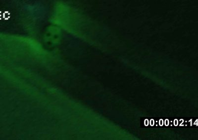 Crybaby Bridge Baby Caught on Camera